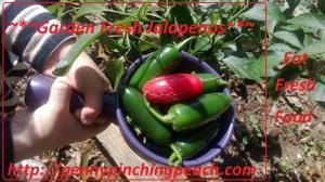 Garden Fresh Jalapenos